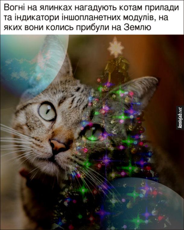 Прикол Чому коти люблять новорічні ялинки. Вогні на ялинках нагадують котам прилади та індикатори іншопланетних модулів, на яких вони колись прибули на Землю