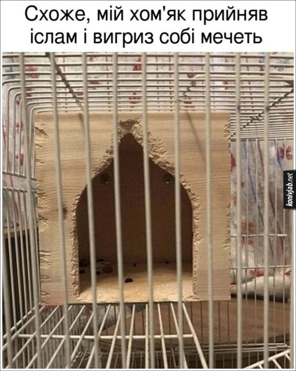 Смішна фотка хом'як. Схоже, мій хом'як прийняв іслам і вигриз собі мечеть