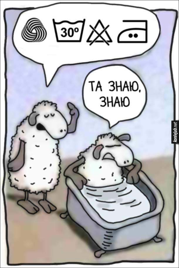 Смішний малюнок про овець. Одна вівця залізла у ванну, а інша розказує про правила догляду за вовною. Вівця у ванній: - Та знаю, знаю