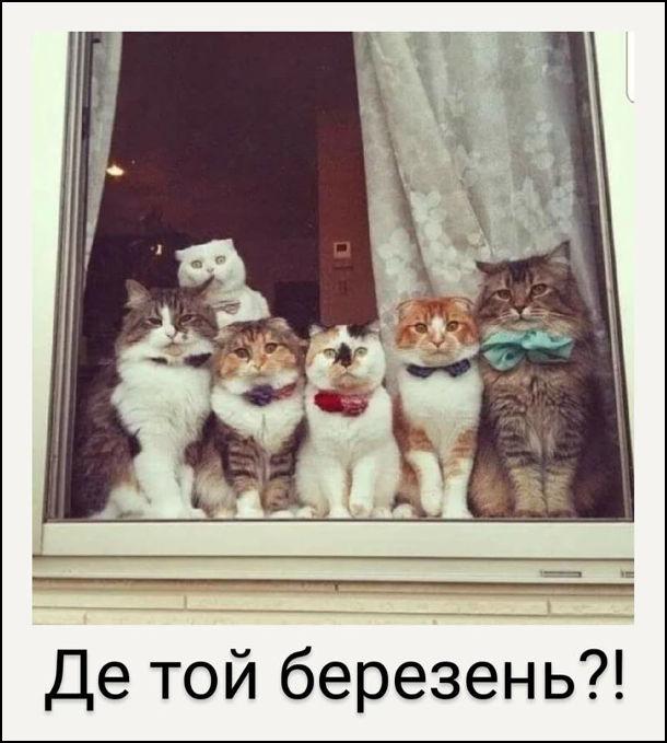 """Мем Коти на підвіконні сидять і дивляться у вікно. """"Де той березень?!"""""""