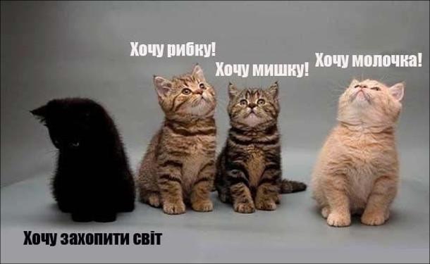 """Прикол Четверо кошенят - двоє рябих, рудий і чорний. Рябі і рудий: """"Хочу рибку!"""" """"Хочу мишку!"""" """"Хочу молочка!"""". Чорний: """"Хочу захопити світ"""""""