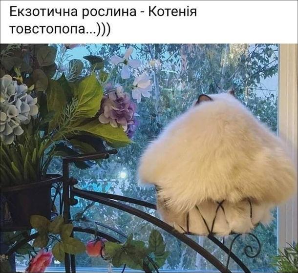 Прикол Кіт серед квітів. Екзотична рослина - Котенія товстопопа...
