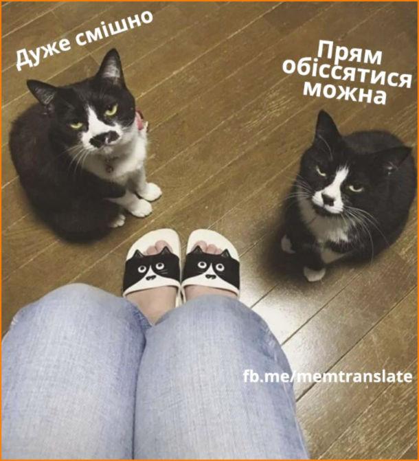 """Прикол капці з котами. Купила капці з замальованими чорними котячими мордочками. Двоє чорних доманшіх котів: """"Дуже смішно"""", """"Прям обіссятися можна"""""""
