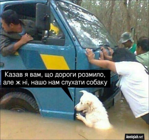 """Прикол Собака допомагає витягти машину з болота. """"Казав я вам, що дороги розмило, але ж ні, нашо нам слухати собаку"""""""