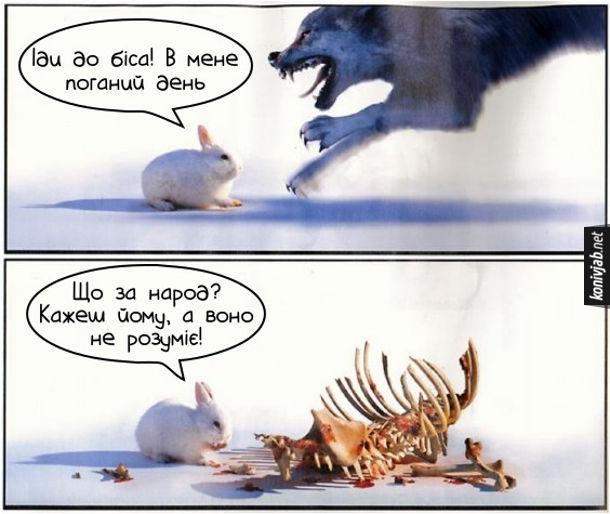 Прикол заєць і вовк. Вовк кидається на зайця. Заєць: - Іди до біса! В мене поганий день. Наступне фото: заєць сидить біля вовчих кісток: - Що за народ? Кажеш йому, а воно не розуміє!