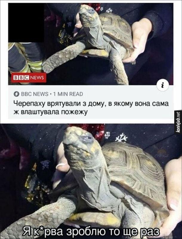 Смішна новина про черепаху. Черепаху врятували з дому, в якому вона сама ж влаштувала пожежу. Черепаха: - Я к*рва зроблю то ще раз