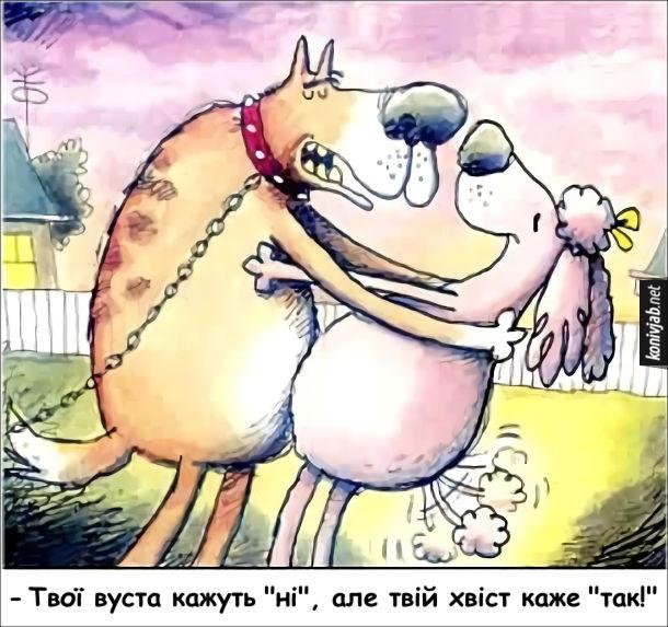 Смішний малюнок Собача романтика. Пес каже: Твої вуста кажуть ні, але твій хвіст каже так