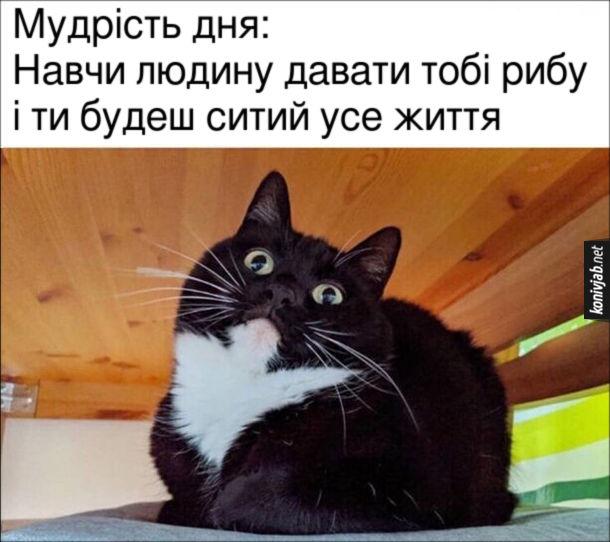 Котяча Мудрість дня: Навчи людину давати тобі рибу і ти будеш ситий усе життя