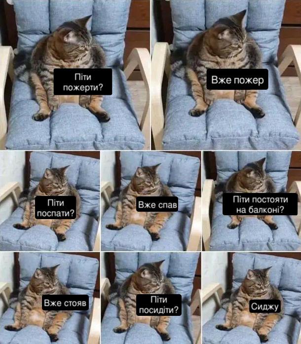 Кіт сидить на кріслі і думає: - Піти пожерти? Вже пожер Піти поспати? Вже спав. Піти постояти на балконі? Вже стояв. Піти посидіти? Сиджу.
