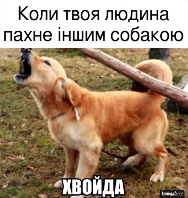 Прикол Собака ревнує. Коли твоя людина пахне іншим собакою: - Хвойда!