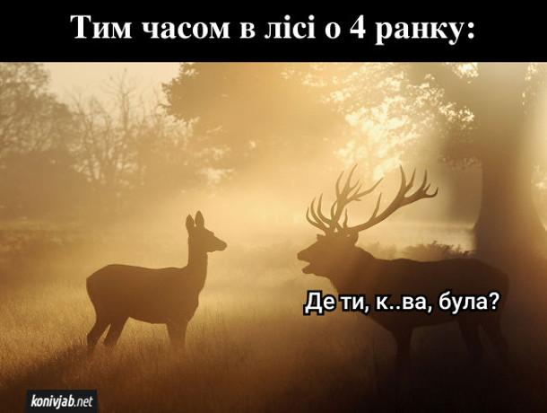 Смішна картинка про оленів. Тим часом в лісі о 4 ранку. Олень до оленихи: - Де ти, курва, була?