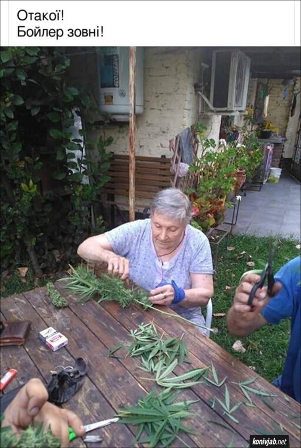 Прикол Бабця і конопля. Бабця сидить на подвір'ї за столом і обрвзає листя коноплі. Коментар: Отакої! Бойлер зовні!