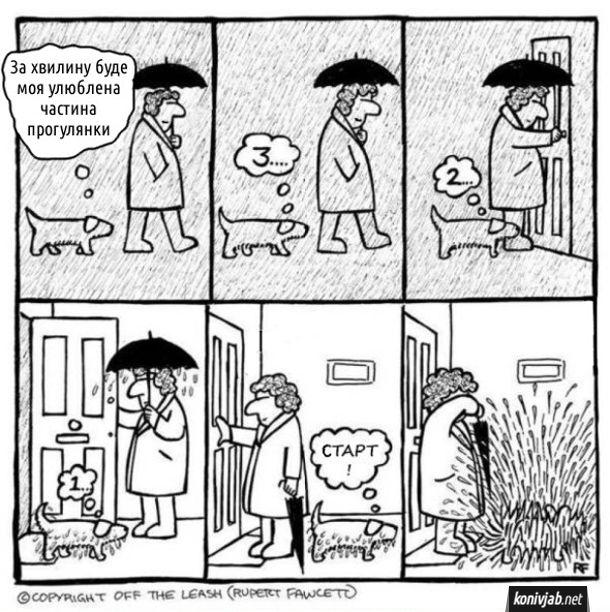 Смішний комікс Прогулянка з собакою під дощем. Жінка гуляє з собакою під дощем. Собака думає: - За хвилину буде моя улюблена частина прогулянки. 3... 2... 1.... (зайшли в хату) Старт! (починає обтрушуватись і обдає хазяйку водою з ніг до голови)
