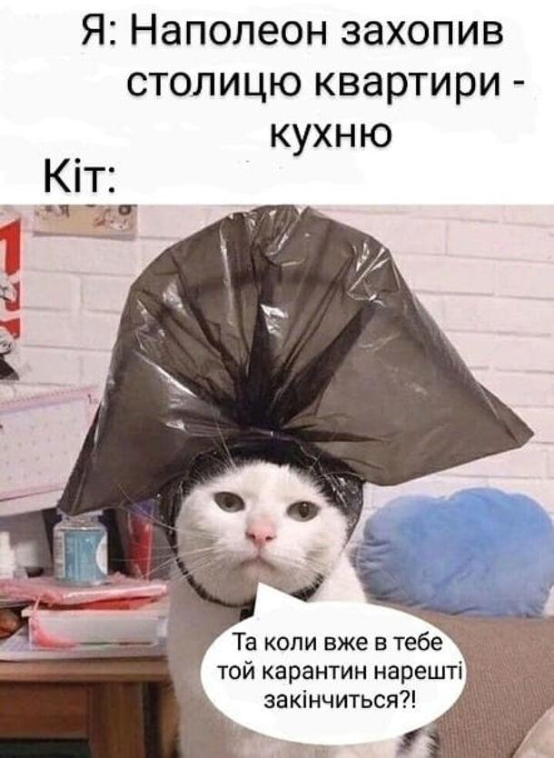 Я (надівши на нолову кота мішок для сміття: Наполенон захопив столицю квартири - кухню. Кіт: - Та коли вже в тебе той карантин нарешті закінчиться?!
