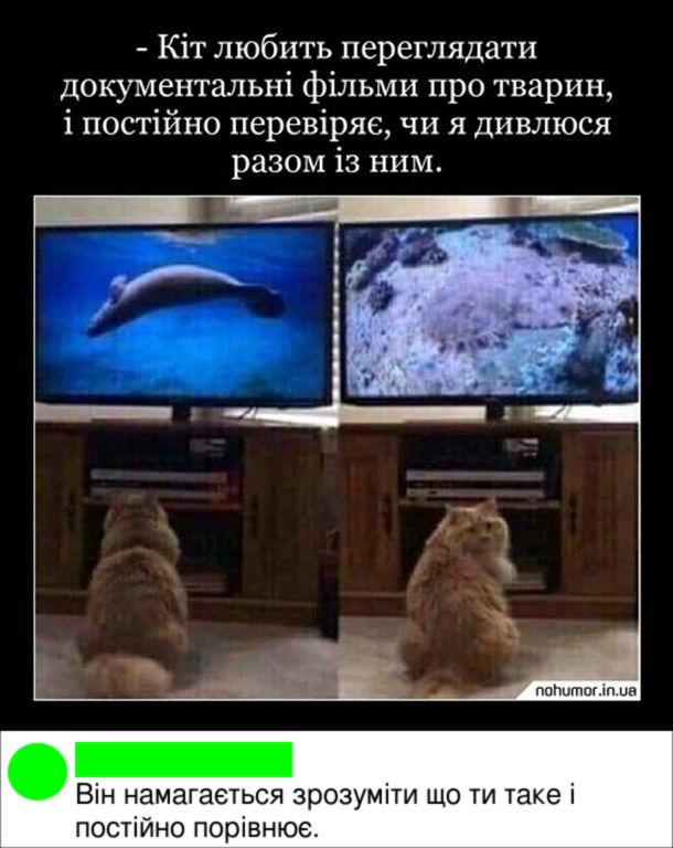 Прикол Кіт дивиться телевізор. Кіт любить переглядати документальні фільми про тварин і постійно перевіряє, чи я дивлюся разом із ним. Комент: Він намагається зрозуміти що ти таке і постійно порівнює.