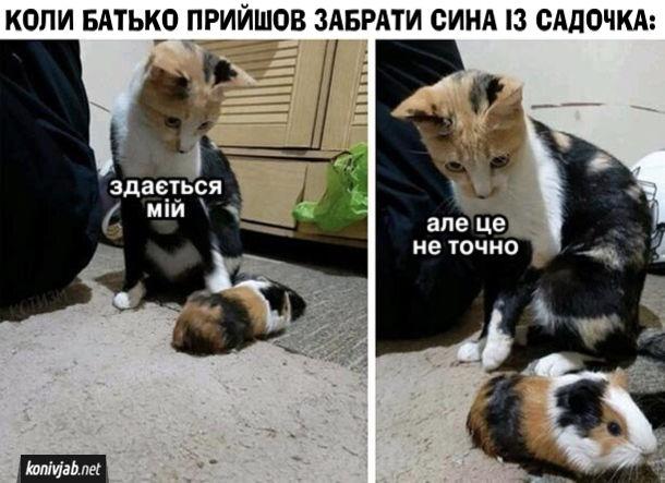 Мем Батько забирає сина з дитсадка. Коли батько прийшов забрати сина із садочка: - Здається мій... але це не точно. На фото: Кіт розглядає морську свинку схожої масті