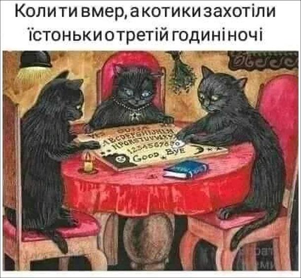 Коти Спіритичний сеанс. Коли ти вмер, а котики захотіли їстоньки о третій годині ночі
