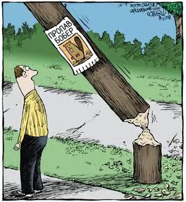 """Смішний малюнок про бобра. Похилений обгризений телеграфний стовп на якому висить оголошення """"Пропав бобер"""""""