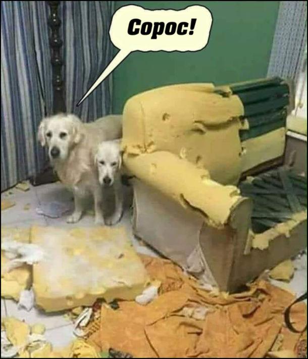 Мем Сорос. Собаки погризли диван. - Хто це зробив? - Сорос!