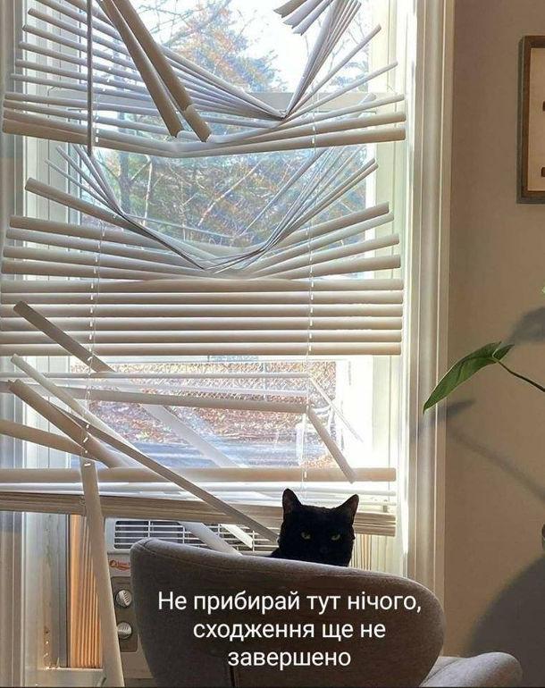 """Смішна фотка Кіт зламав жалюзі на вікні. """"Не прибирай тут нічого, сходження ще не завершено"""""""
