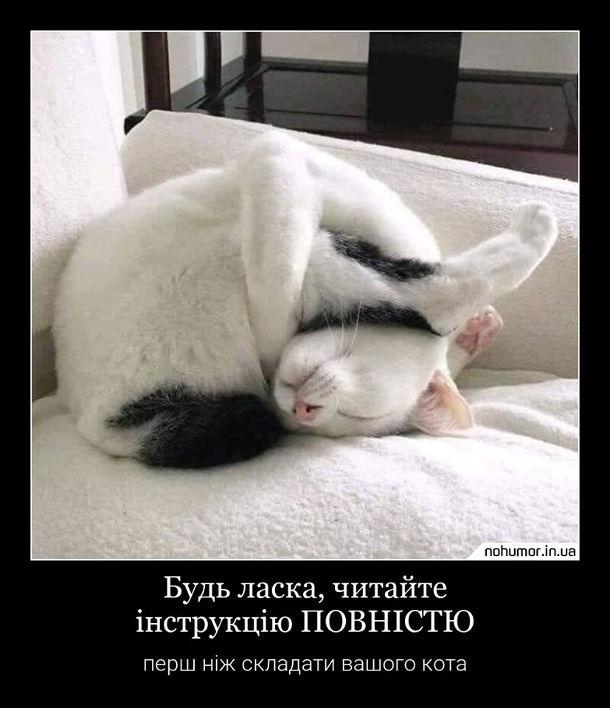 Кіт в смішній позі. Будь ласка, читайте інструкцію повністю перш ніж складати вашого кота