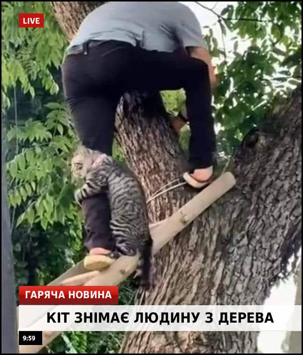 Смішне фото Кота знімають з дерева. Гаряча новина:Кіт знімає людину з дерева
