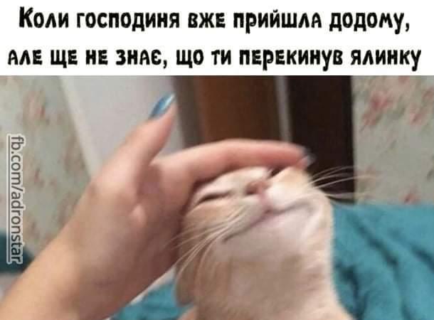 Смішна картинка Кіт нашкодив. Коли господиня вже прийшла додому, але ще не знає, що ти перекинув ялинку.