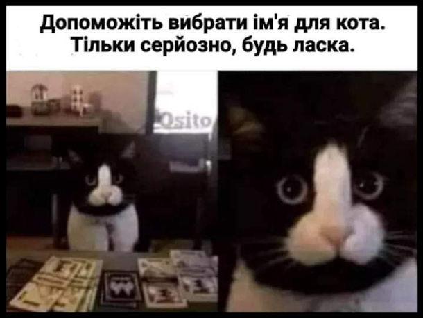 Смішна фотка Кіт з плямою у формі пеніса. Допоможіть вибрати ім'я для кота. Тільки серйозно, будь ласка.