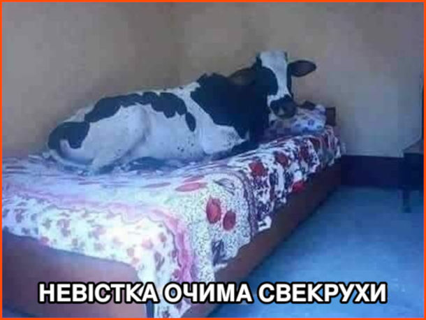Прикол Невістка очима свекрухи: корова, що розляглась на ліжку