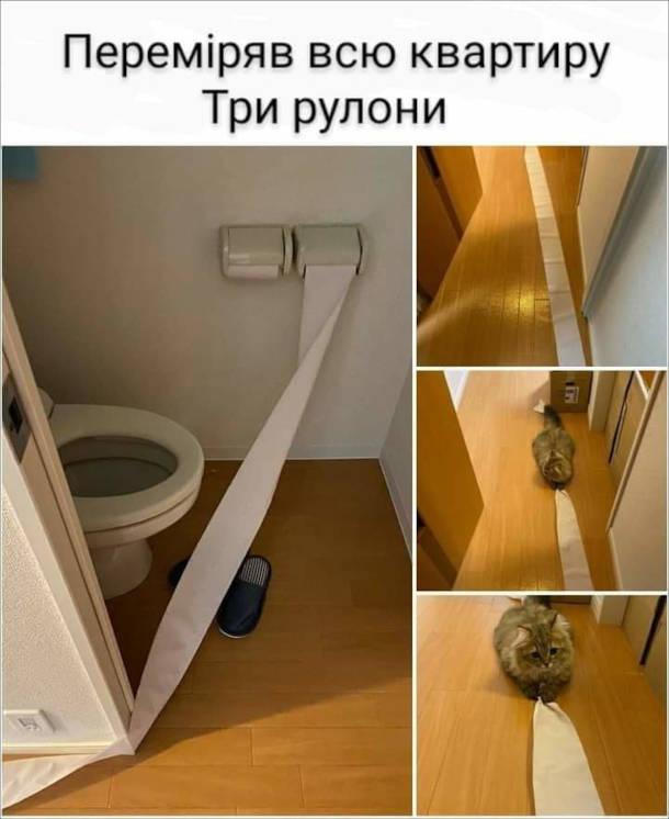 Прикол Кіт розмотав туалетний папір. Переміряв всю квартиру. Три рулони.