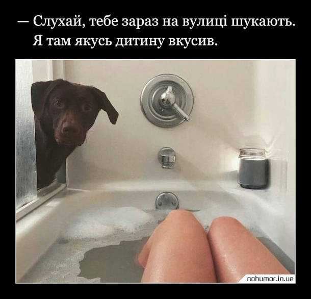 Прикол Пес заглянув у ванну. - Слухай, тебе зараз на вулиці шукають. Я там якусь дитину вкусив.