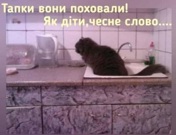 Кіт насцяв у раковину на кухні. - Тапки вони поховали! Як діти, чесне слово....