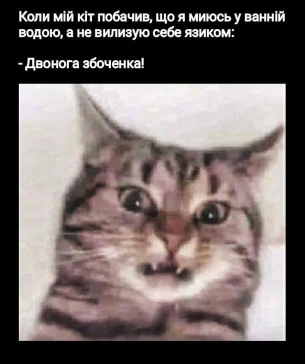 Мем Кіт і миття у ванні. Коли кіт побачив, що я миюсь у ванній водою, а не вилизую себе язиком: - Двонога збоченка!