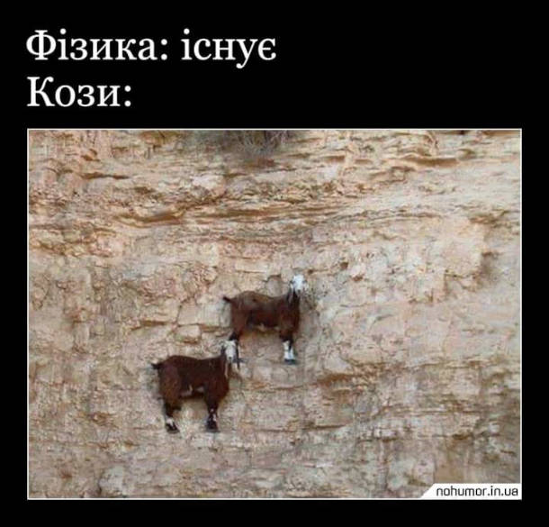 Мем про гірських козлів. Фізика: існує. Кози: (якимось чином тримаються на вертикальному схилі гори)