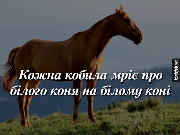 Анекдот про кобилу. Кожна кобила мріє про білого коня на білому коні