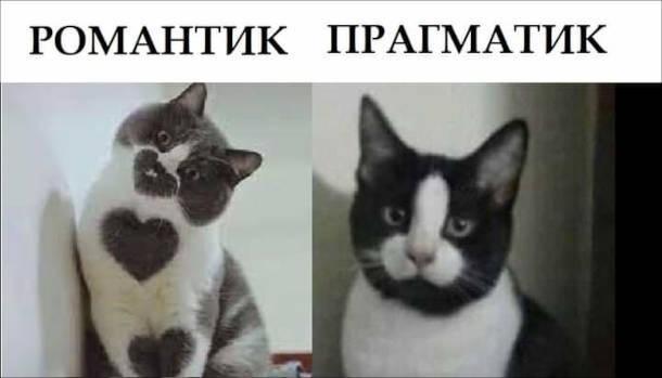 Коти з смішним окрасом. Романтик (кіт з сердечками). Прагматик (кіт з зображенням пеніса)