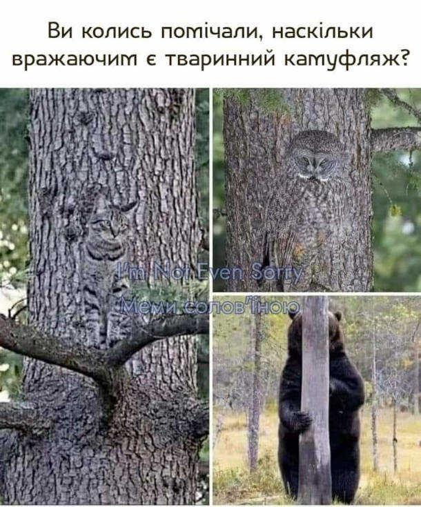 Прикол Тварини маскуються. Ви колись помічали, наскільки вражаючим є тваринний камуфляж? (Кіт і сова нзливаються з текстурою стовбура дерева і ведмідь що намагається сховатись за тонким стовбуром)