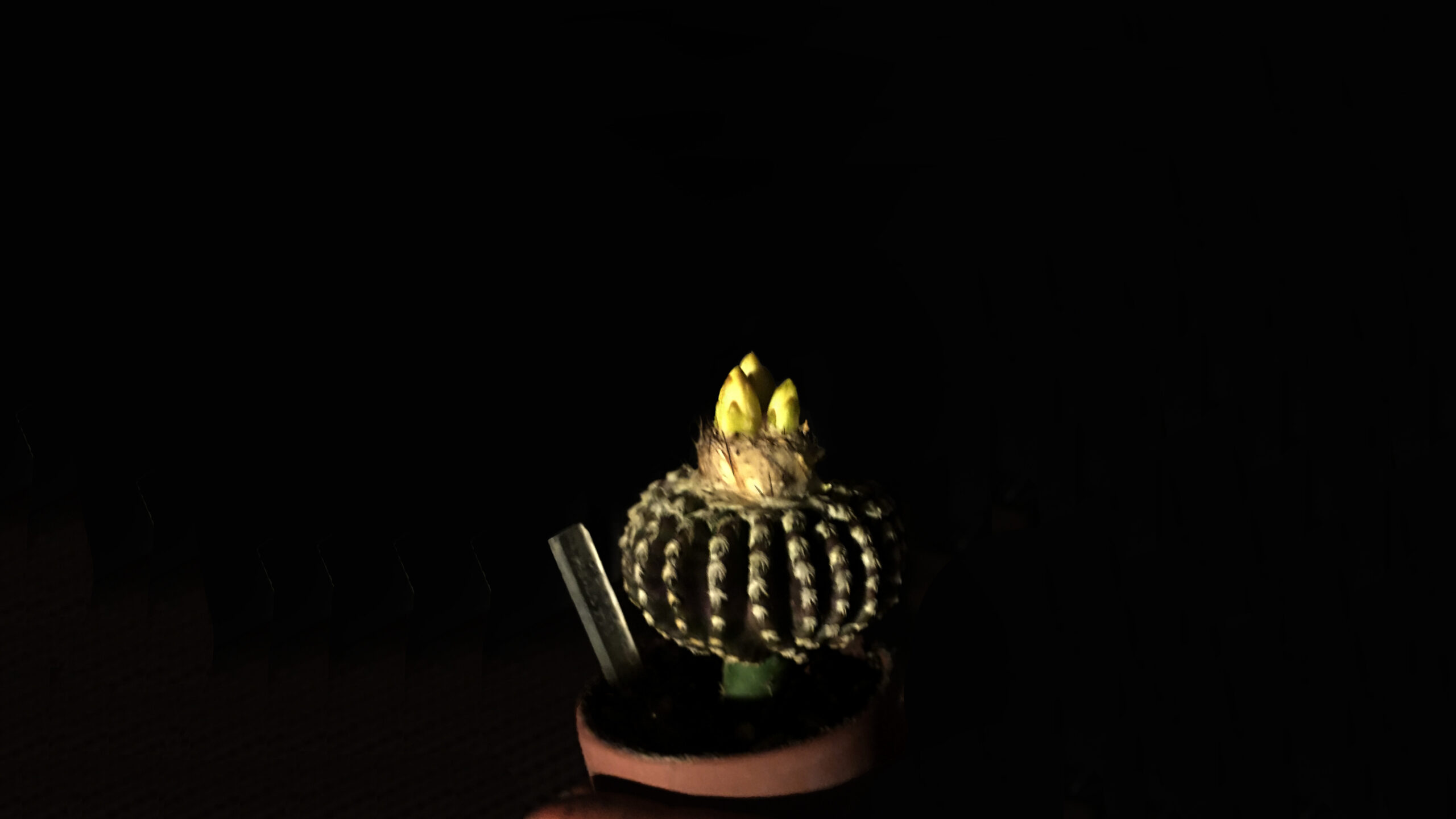 Victoria Adam: 14 May 2019_Cactus-bloom_One-night-only.MOV
