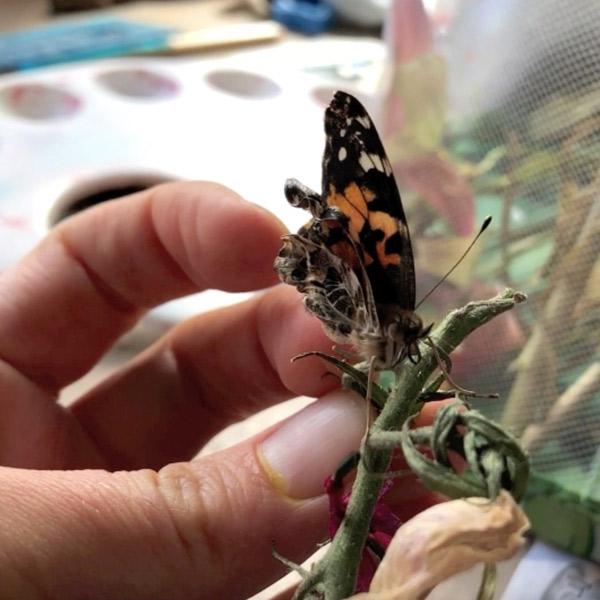 Lana Locke Virus Butterfly 2020