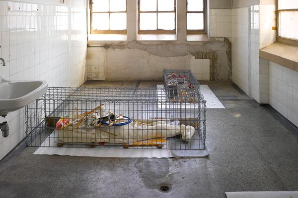 Harley Kuyck Cohen, Body Farm, EKO 8 installation view, 2021