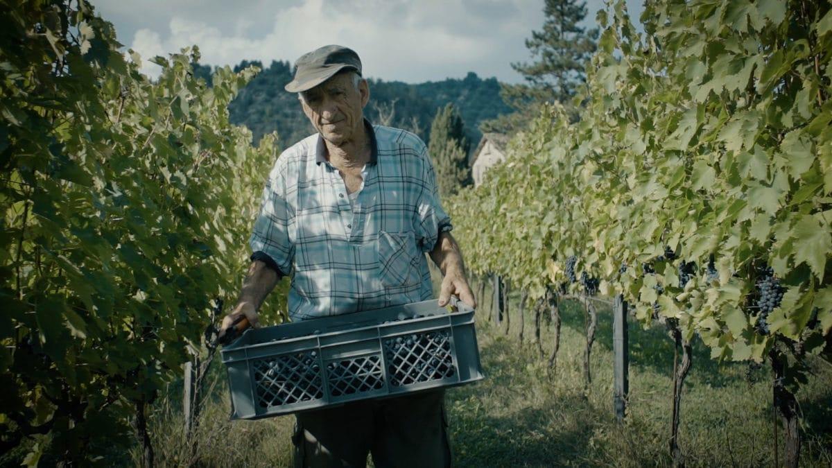 cantina casa di produzione Caviro cinefood enologia filmmaker Forlì Italia storia vendemmia video videomaker vigneto vino vite