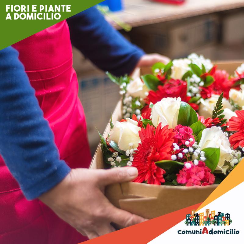 piante e fiori a domicilio con comuni a domicilio
