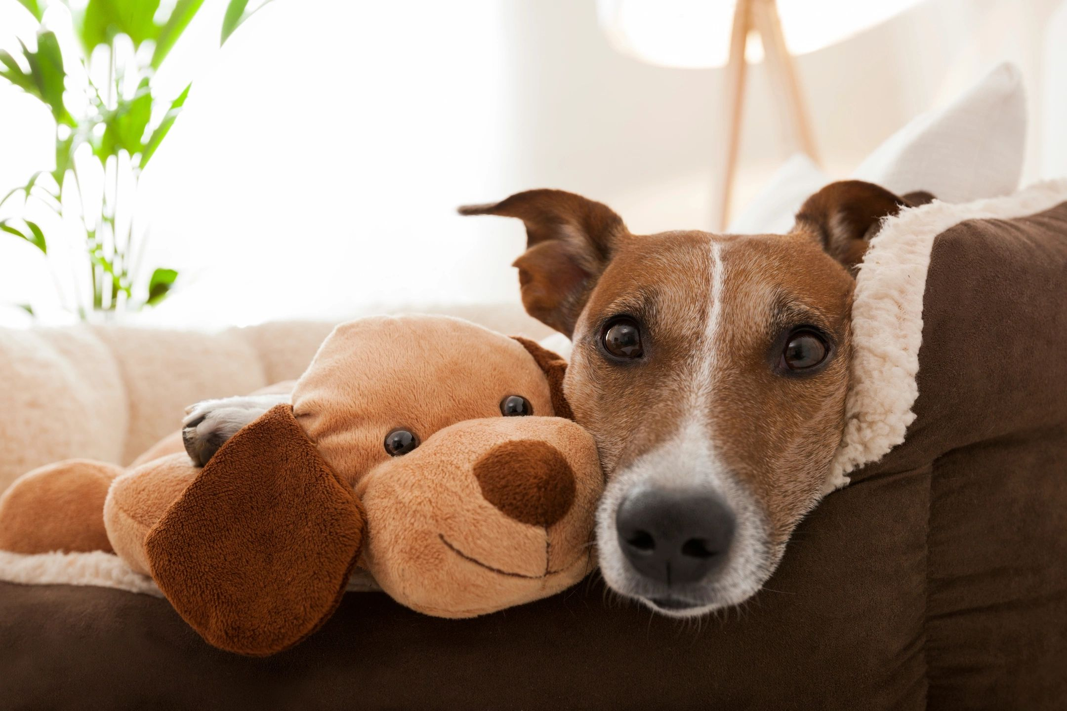 Dog and Cuddly Toy
