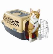 Pet Taxi - Cat