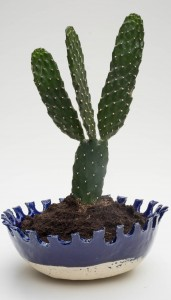 blue scallop bowl with cactus