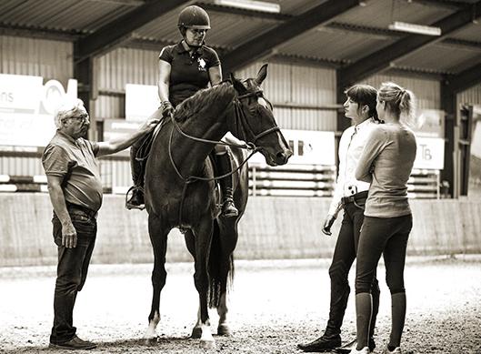 europa-horse-agency-buy-a-european-horse