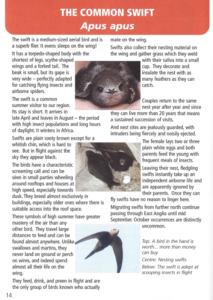 Swifts apus apus article