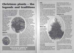 Christmas plants article