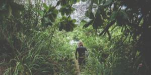 navigating jungle