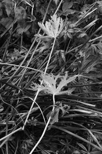 Tonal_warm-up_garden_2_Marianne_Dorn
